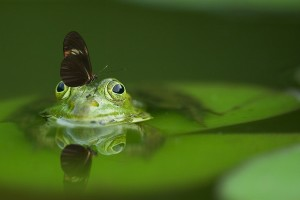 frog reflection