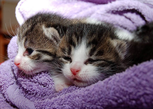 two kittens in a blanket